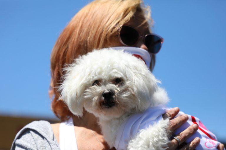 PetSmart Sued | Working Dog Times